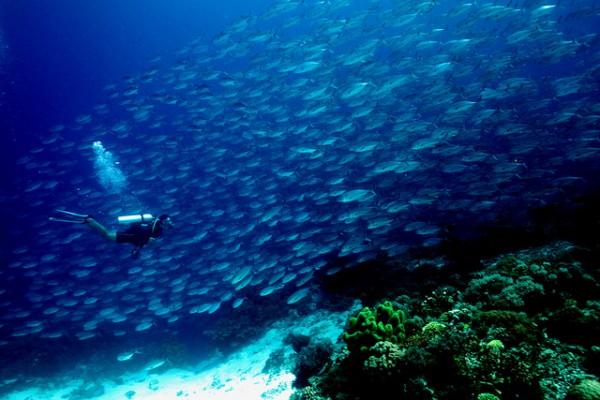 Diving in Tubbataha Reef by Q Phia via Flickr