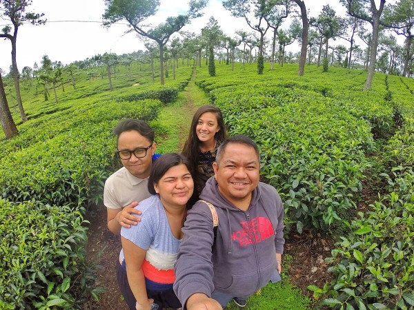 Stopover at the Tea Plantation