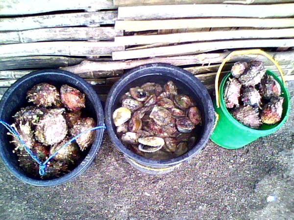 Marketplace shells