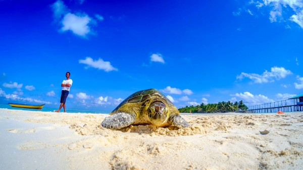 Turtle in Onuk Island by Nelo Marasigan-Manzo