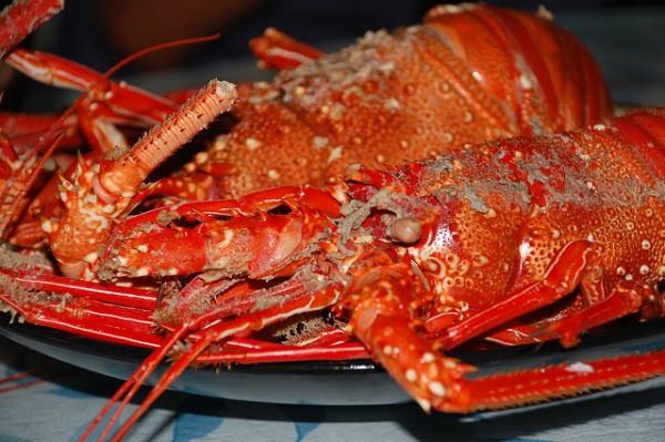 Cook Lobster in Batanes