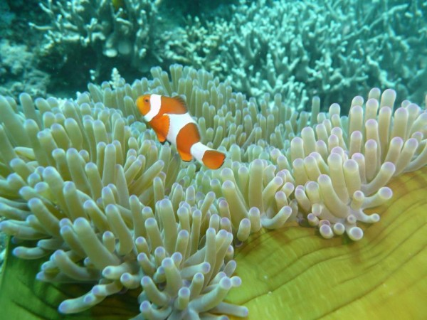 Finding Nemo photo by Molopolo fish and Birds Sanctuary FB