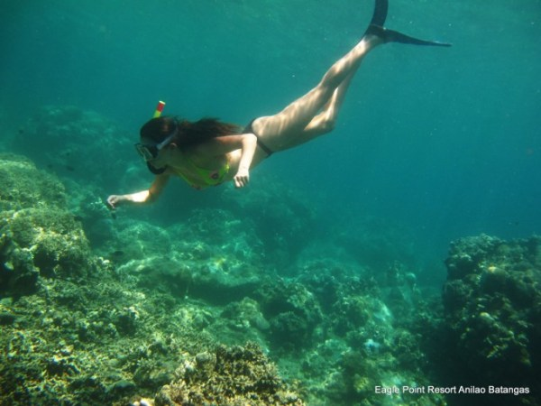 Snorkeling in Anilao photo by eaglepointresort.com.ph