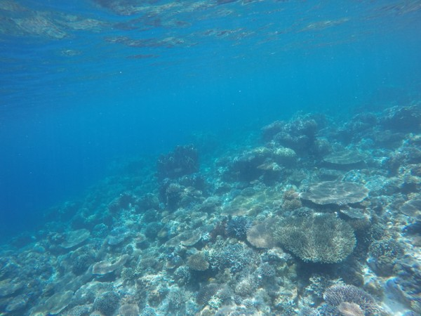 Apo Reef Underwater photo