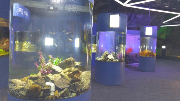 Fish Tanks inside the cave