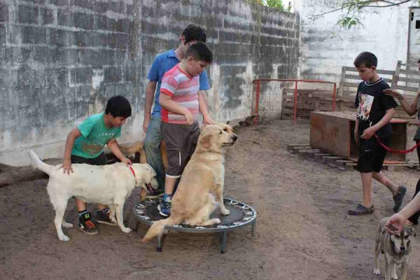 If you are interested in giving back and gaining experience working with people and animals, joining our Canine Therapy Project in Argentina is a great opportunity to combine elements of our Care and Animal Care programs