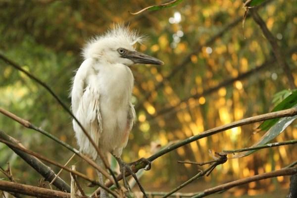 Endemic bird at Baras Bird Sanctuary in Tacurong