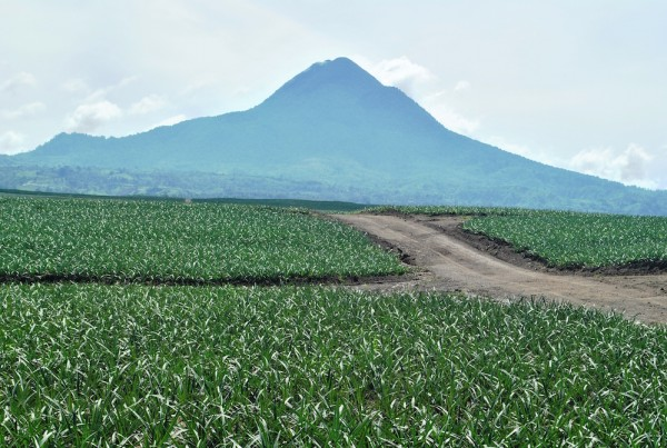 Mt Matutum and pineapple farms in South Cotabato