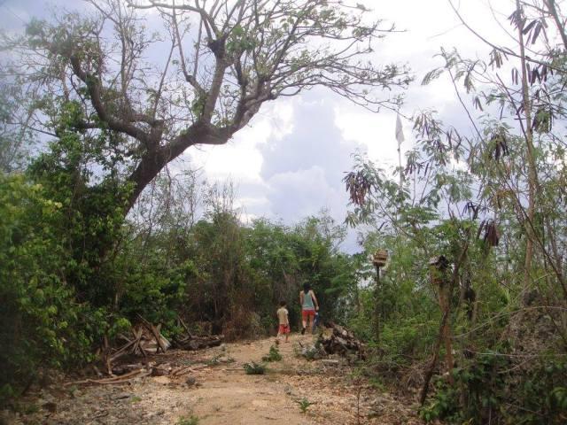 A scenic passage that leads around Birdland