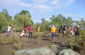 The participants plant bakawan seedlings in the coast's muddy site