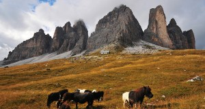 Alpine horses grazing on the lower slopes of the massif.