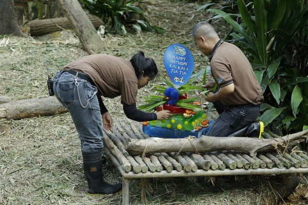 Nor Faizah Bt Abdul Aziz, 23, Giant Panda Junior Keeper, and Halim Ali, 49, Assistant Curator, putting the final touches on Kai Kai's cake.