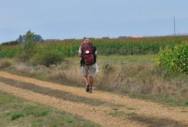 A lone peregrino passing by a cornfield which is a common sight on the landscape.