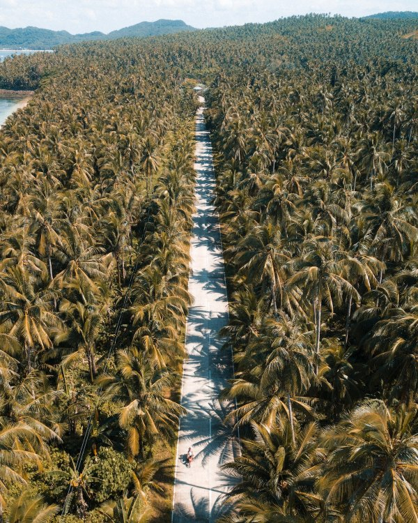 Biking through the thousands of coconut trees in Siargao An experience unlike anything else @michaelslouie via unsplash