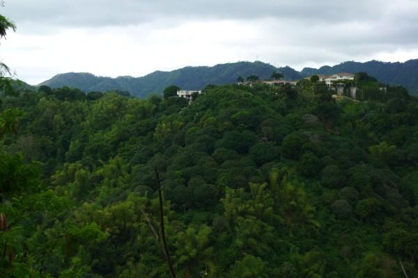 Lush greenery of Busay