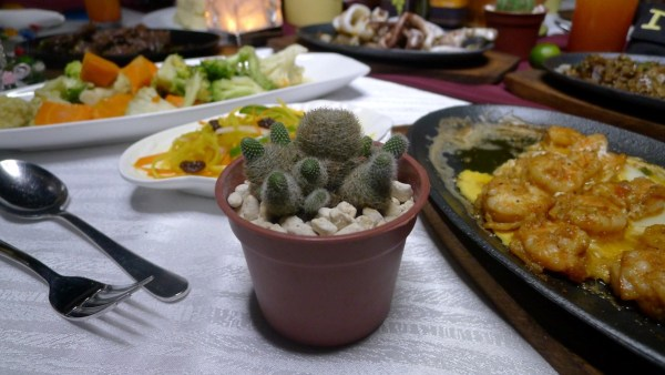 Sizzling favorites at Marco Polo's El Viento