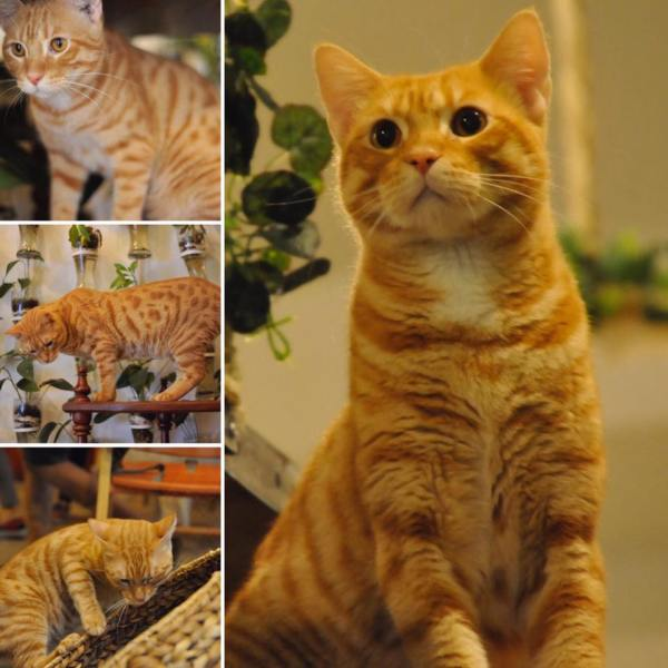 Bengal Brew Cat Cafe
