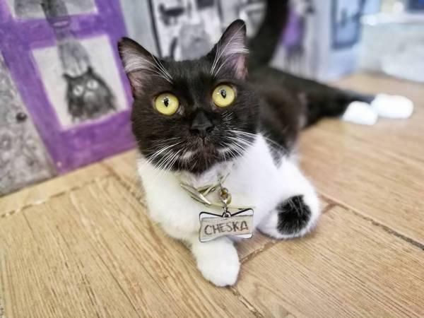 Cheska at Cat Cafe Manila
