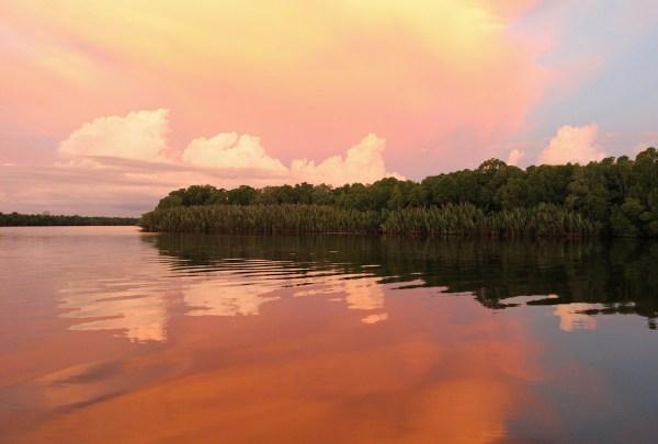 Sungei Klias Mangrove Sabah