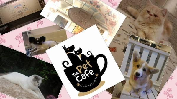 The Pet Cafe by Velvet Friends photo via FB Page