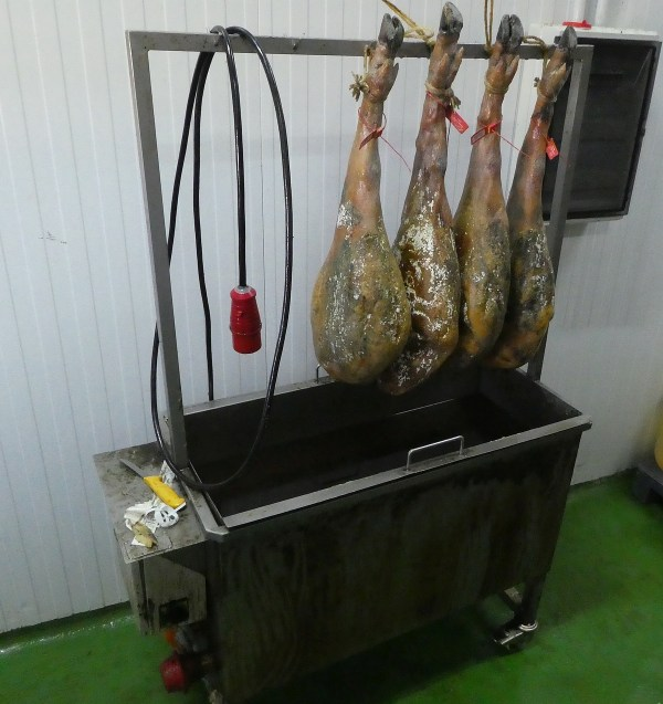 red tagged hams hanging after washing
