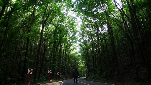 Bilar Man-Made Forest in Bohol