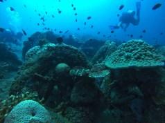 Ginaaman Reef