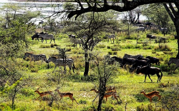 Tanzania - Travel Destinations for Business Inspiration