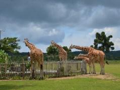 Calauit Safari Park in Palawan