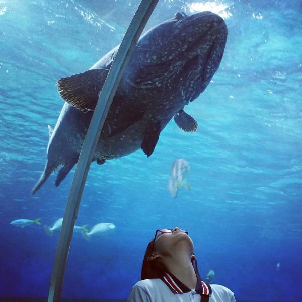 Manila Ocean Park photo via Facebook