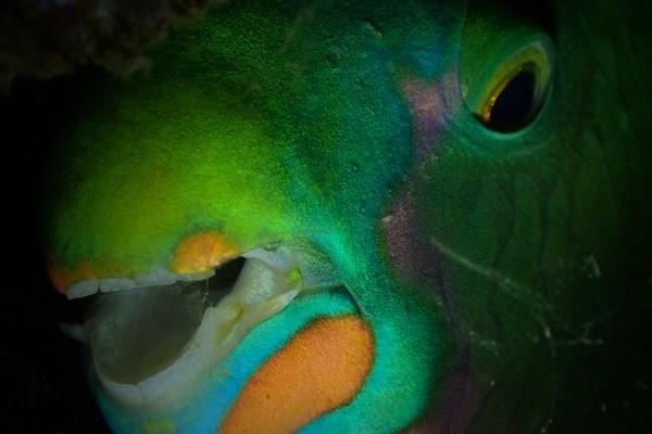 Fish Portrait Category, Jorge Ida