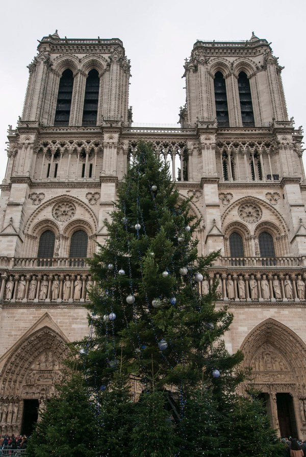 A tall Christmas tree stands outside Notre Dame's front facade.