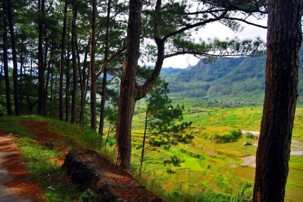 sagada rice terraces by Ironchefbalara via Flickr