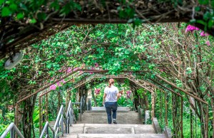 Bougainvillea covered walkway at Marian Orchard