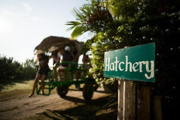 EDL Farm Hatchery by Martin San Diego - NPVB