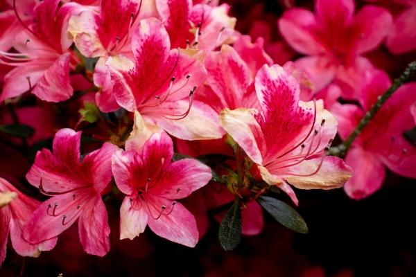 Flowers in Bloon at Berggarten