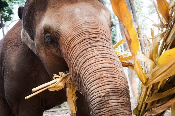 Elephant Jungle Sanctuary 1 - Chiang Mai LQ