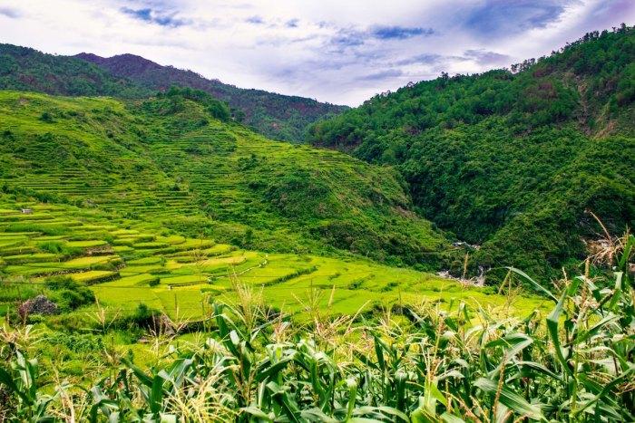 Sagada Rice Terraces by @aldrino via Unsplash