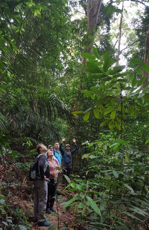 FRIM Forest Reserve