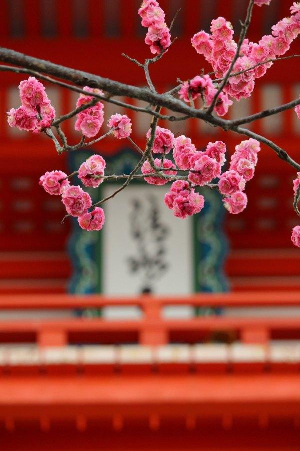 Fascinating Kyoto photo by Rena via Unsplash