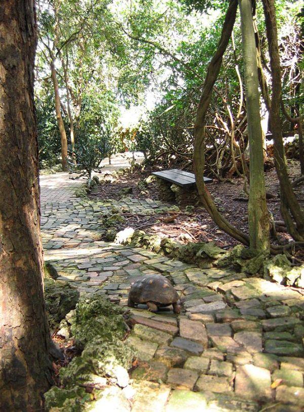 Barbados Wildlife Reserve photo by Postdlf via Wikipedia CC