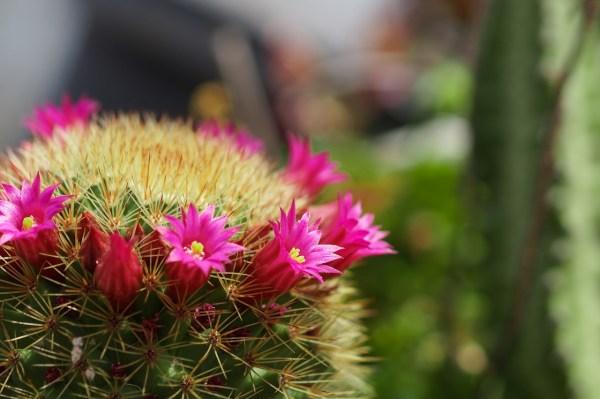 Botanical Garden El Charco del Ingenio