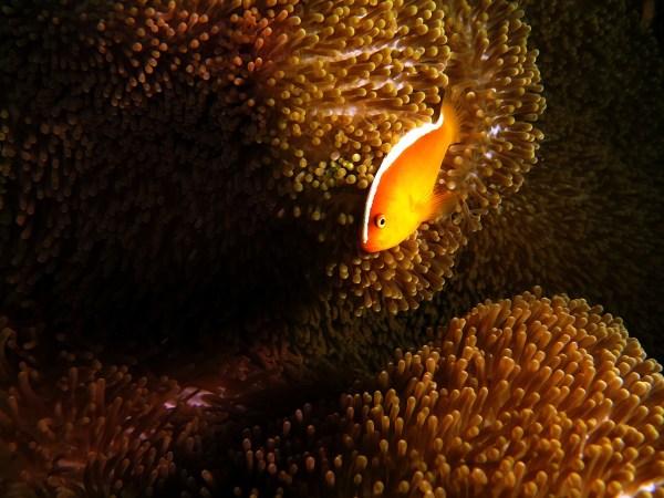 Dive Resorts in Anilao, Batangas
