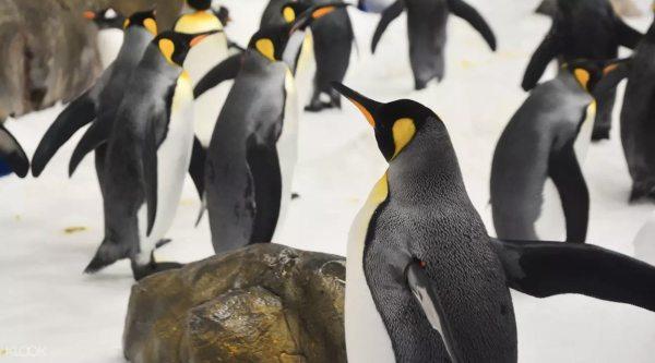 Port of Nagoya Public Aquarium photo via KLOOK