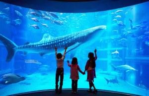 Blue Whale Shark inside Osaka Aquarium Kaiyukan in Japan photo via FB Page