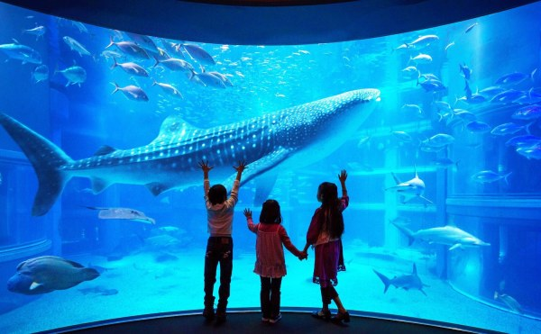 Blue Whale Shark inside Osaka Aquarium Kaiyukan in Japan photo via FB Page