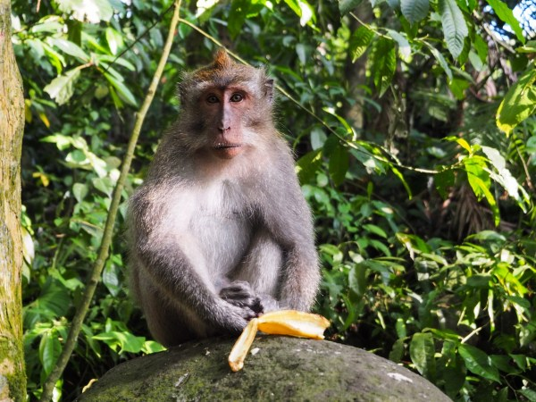 Monkeys in Batu Caves