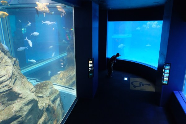 One of the largest aquarium in the World