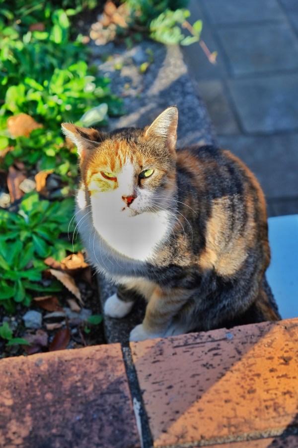 Cat in Nagasaki