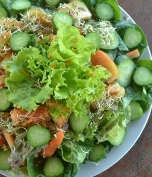 Fresh Salad at Costales Nature Farms